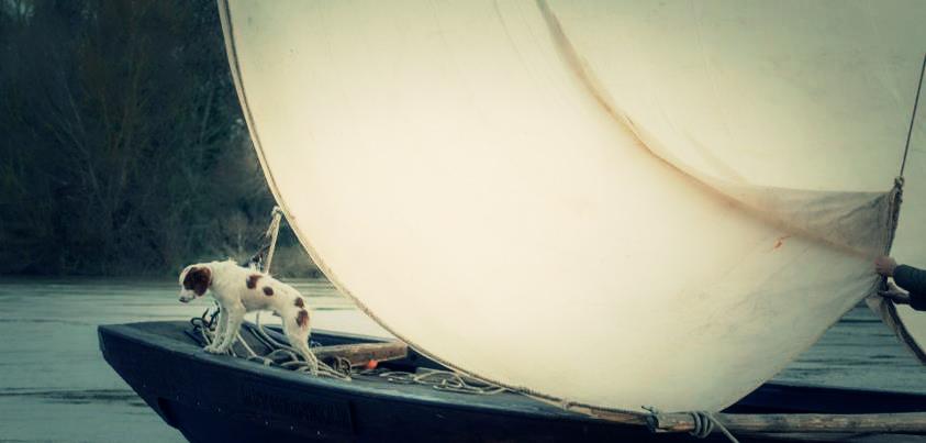 bateau-avec-chien